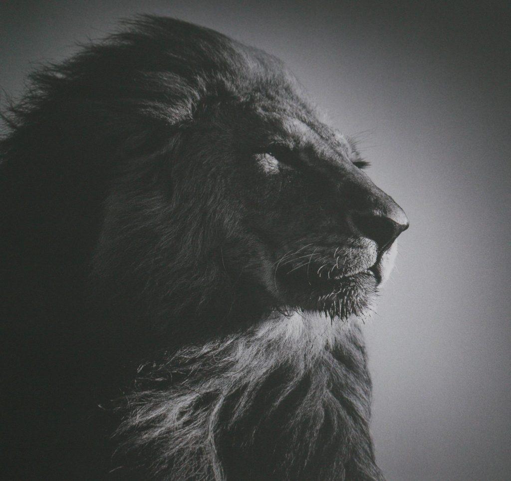 De Leeuwenpoort - Leeuw