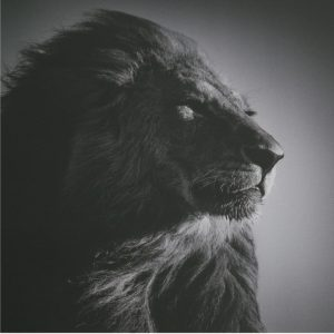 De Leeuwenpoort - Leeuw sq